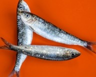 sardines_dh6a5668